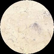 Hadrian <br>Limestone<br>TexaStone Quarry<br><a href=http://texastone.com/specs_samples.htm>TexaStone Quarries</a><br>Garden City, TX